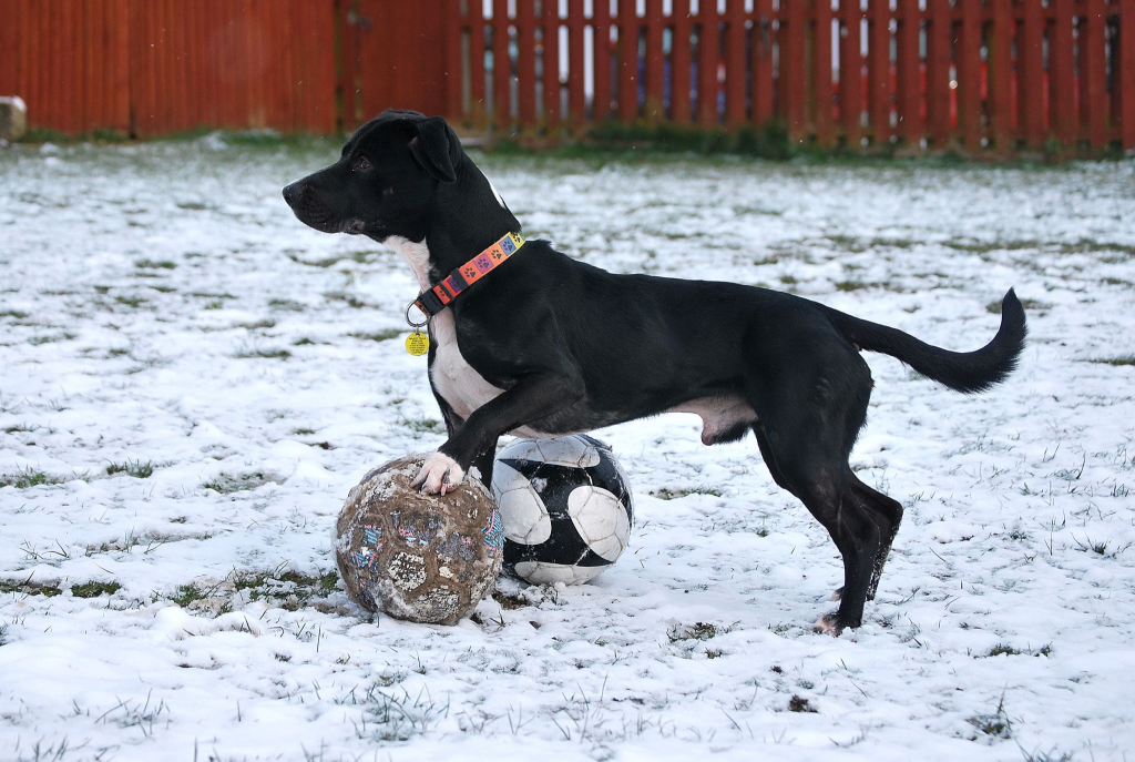 roman 2 dog rescue dorset waggy tails rescue